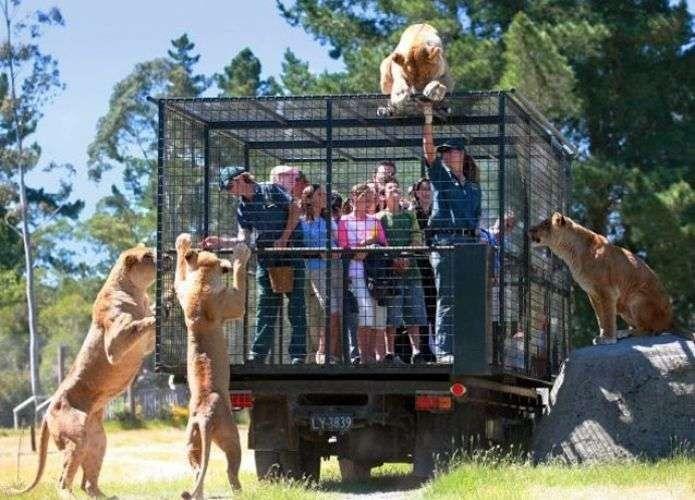 حديقة حيوانات بورصة تركيا