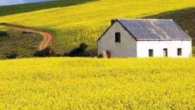 Photo of الحياة الريفية في جنوب افريقيا…وصف الريف الجنوب أفريقي ومظاهر العيش هناك