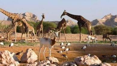 Photo of حديقة الحيوان في العين … كل ما تحتاج لمعرفته عن هذا المكان المشوق