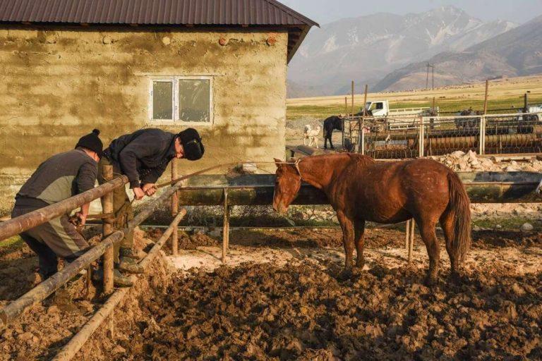 معلومات عن الحياة الريفية بكازاخستان
