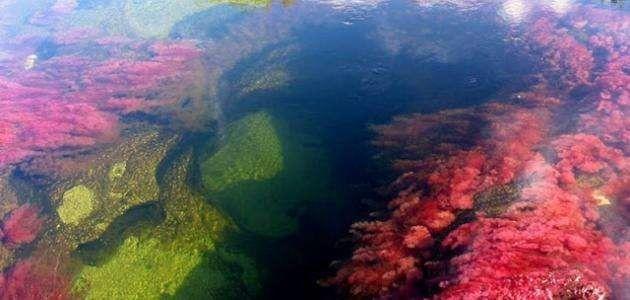 معلومات عن نهر الكريستال