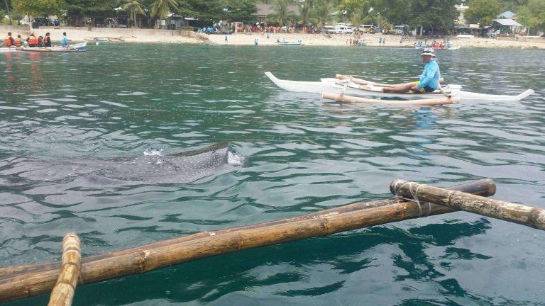 الأنشطة والأماكن السياحية في جزيرة أوسلوب الفلبين