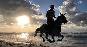 Photo of فوائد ركوب الخيل .. تعرف على الفوائد الجسدية والنفسية لركوب الخيول