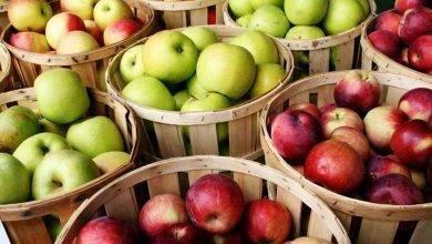 Photo of طريقة حفظ التفاح… تعرف على الطرق الصحيحة لحفظ التفاح