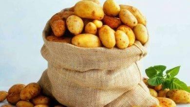 Photo of طريقة حفظ البطاطس.. تعرف على الطرق الصحيحة لتخزين وحفظ البطاطس