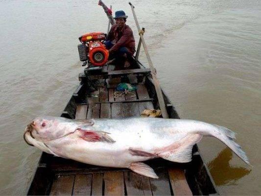 اهمية نهر الميكونغ
