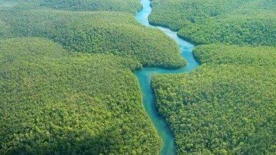 صورة معلومات عن حوض نهر الأمازون
