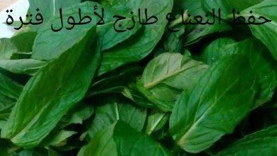 Photo of طريقة حفظ النعناع والحبق بالثلاجة .. تعرف على أفضل طرق لحفظ النعناع