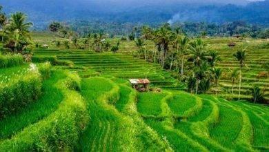 Photo of الطقس في إندونسيا في شهر يونيو