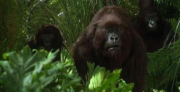 Congo ..
