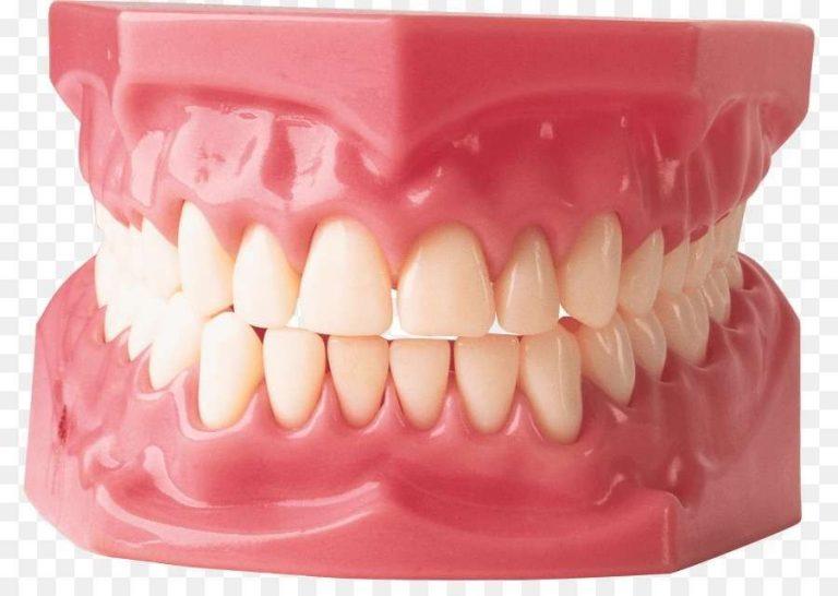 Photo of ما عدد أسنان الإنسان