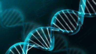 Photo of معلومات عن تخصص علم الوراثة