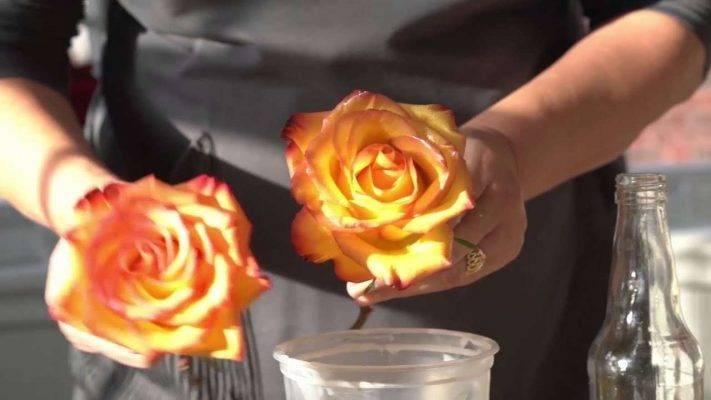 طريقة حفظ الورد الطبيعي لمدة أطول باستخدام الجليسيرين