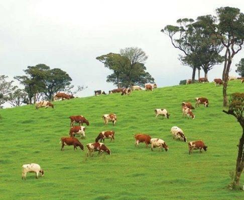 اجمل الاماكن السياحية في نوراليا مزرعة أمبويلا فارم