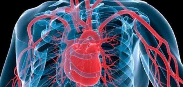 آلية عمل القلب