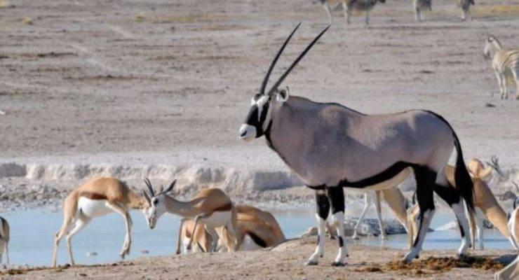 منتزه إيتوشا الوطني - السياحة في ناميبيا 2019