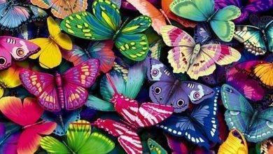 Photo of هل تعلم عن الفراشات