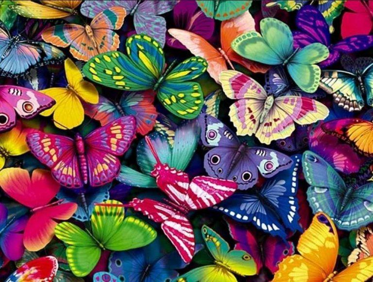 هل تعلم عن الفراشات