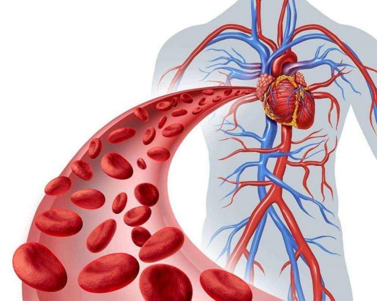 Photo of كم تبلغ كمية الدم في جسم الإنسان .. معلومات هامة عن الدم فى الجسم