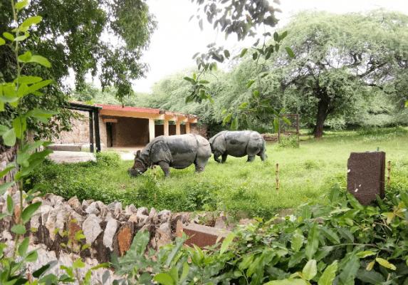 حديقة الحيوان الوطنية - السياحة في نيودلهي 2019