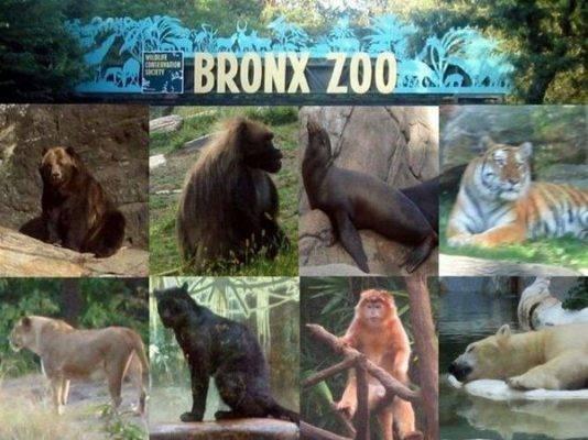 حديقة حيوان برونكس