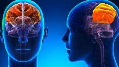 Photo of كيف يعمل المخ البشري ..