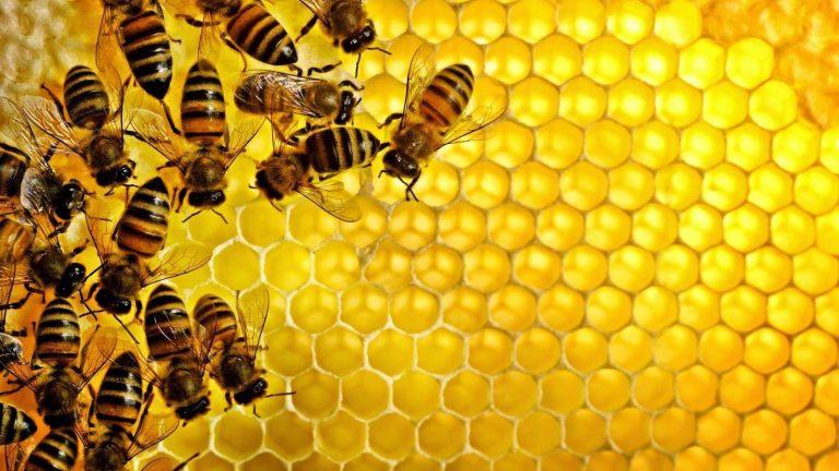 Photo of هل تعلم عن العسل
