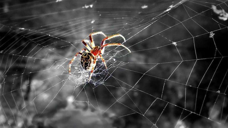 صورة هل تعلم عن العنكبوت