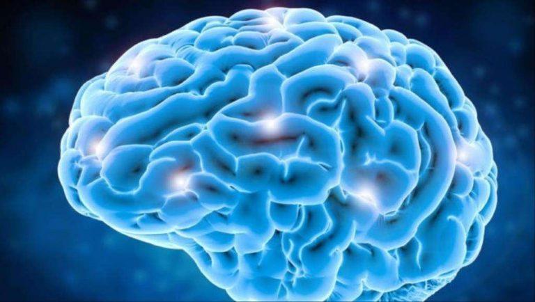 هل تعلم عن الدماغ