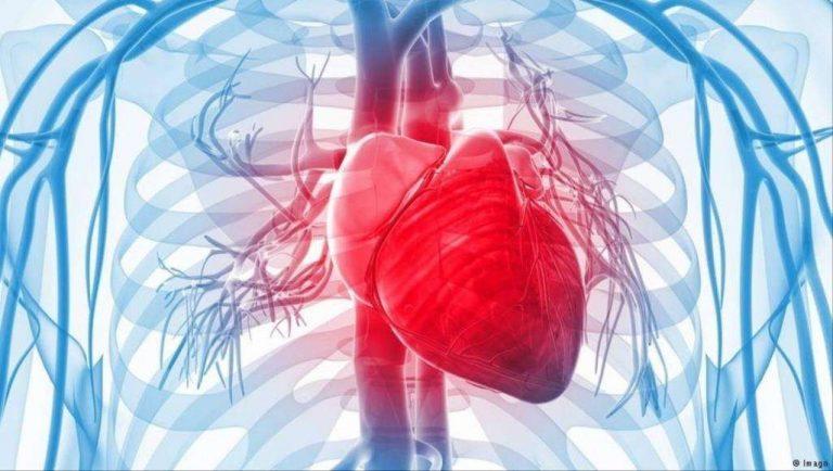 أين يقع قلب الإنسان في الجسم