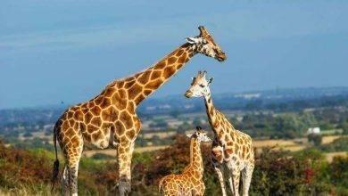 صورة هل تعلم عن الحيوانات