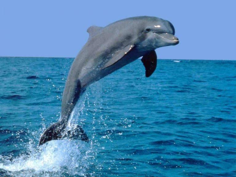 هل تعلم عن الدولفين