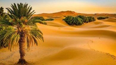 Photo of هل تعلم عن الوطن ليبيا
