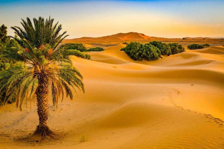 هل تعلم عن الوطن ليبيا