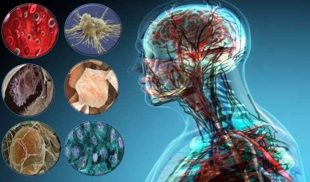 ما أهمية تنوع خلايا جسم الإنسان