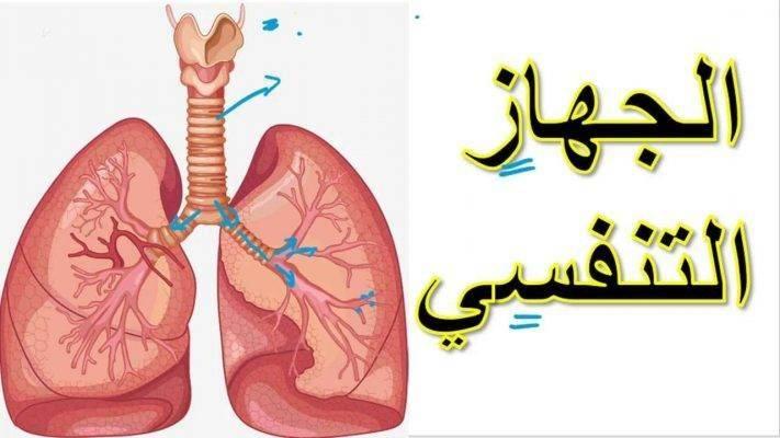 عمل الجهاز التنفسي .. | معلومات