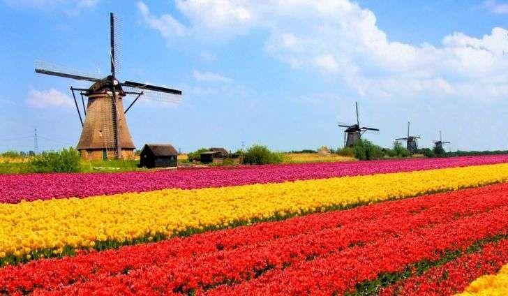 بماذا تشتهر هولندا صناعيا وتجاريا
