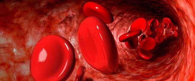 مكونات الدورة الدموية .. تعرف عليها ..