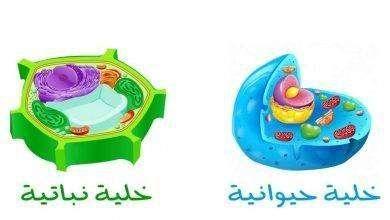 Photo of الفرق بين الخلية الحيوانية والنباتية .. أوجه التشابه والإختلاف بين الخلايا الحيوانية والنباتية .