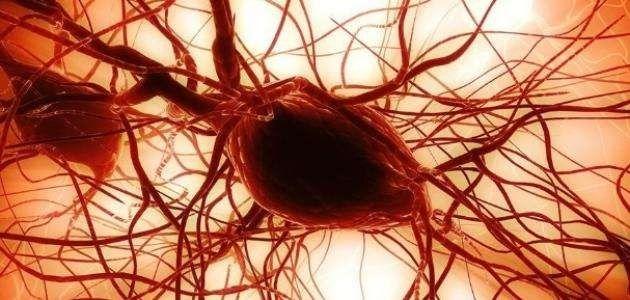 فوائد الخلايا الجذعية