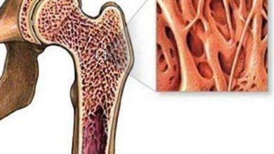 Photo of فوائد نخاع العظم للجسم