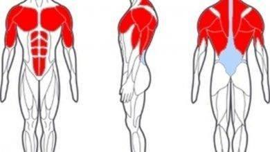 Photo of ما هي اكبر عضله في جسم الانسان
