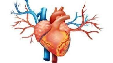 Photo of مراحل الدورة القلبية