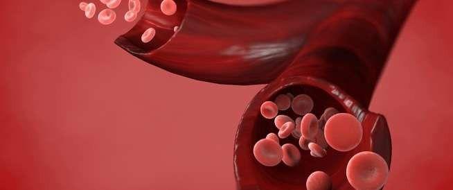 هيكل خلايا الدم الحمراء