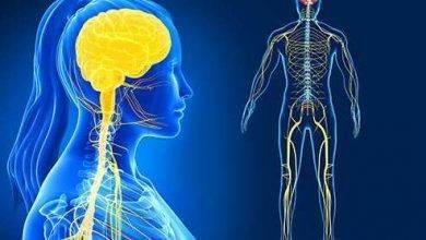 صورة الجهاز العصبي المركزي