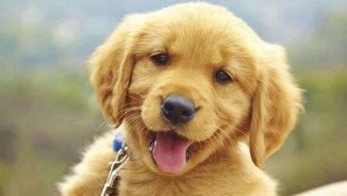 Photo of حكم بالانجليزي عن الكلاب… حكم متنوّعة عن الكلاب من عديد من المشاهير