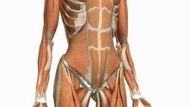 Photo of كم عدد عضلات البطن