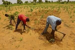 الدّيموغرافيا في دولة النيجر