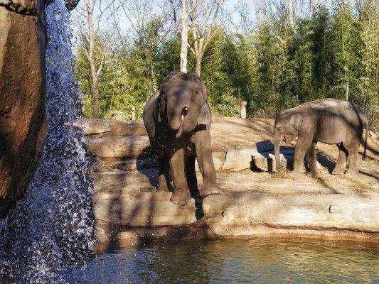 حديقة سانت لويس للحيوانات ..