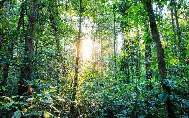 غابات الأمازون ..